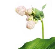 Flora Immagini Stock