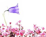 Flora Fotografia Stock Libera da Diritti