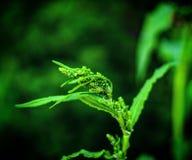 flora lizenzfreie stockfotos