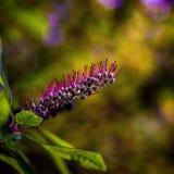 flora lizenzfreies stockfoto