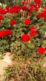 flora foto de stock