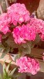 flora foto de stock royalty free