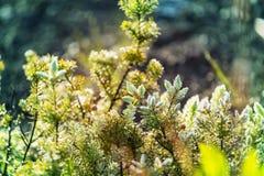 flora fotografia de stock