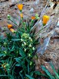 flora stock afbeeldingen