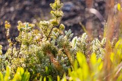 flora stockfotos