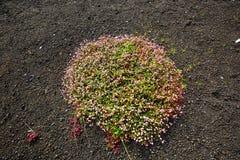 flora stock foto's