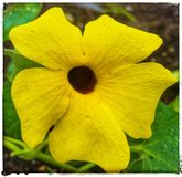 flora imagens de stock