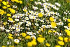 Flora  Royaltyfria Bilder