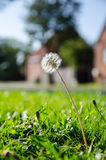 Flora Arkivfoton
