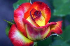 flora Immagini Stock Libere da Diritti