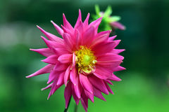 flora Stock Fotografie