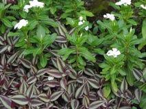 flora Imagen de archivo