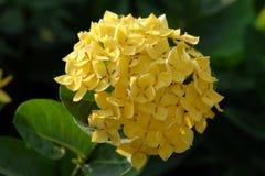 flora Lizenzfreies Stockbild