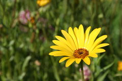 Flora. Yellow flora Royalty Free Stock Images
