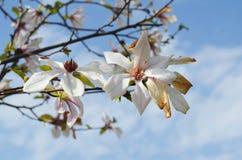 flora Fotografia de Stock Royalty Free