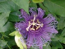 flora Imagens de Stock Royalty Free
