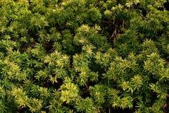 Flora 9 Immagini Stock Libere da Diritti