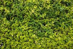 Flora 6 Immagini Stock