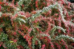 Flora 31 Immagini Stock Libere da Diritti