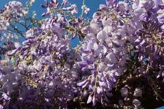 Flora 67 Fotografie Stock