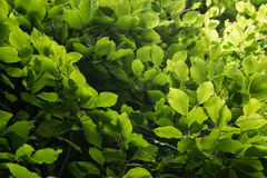 Flora 49 Immagine Stock Libera da Diritti