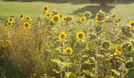 Flora 58 Immagini Stock