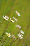 Flora royalty-vrije stock afbeelding