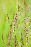 Flora stock foto