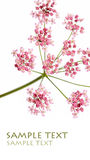 Flora. Lovely flora against white background Stock Image