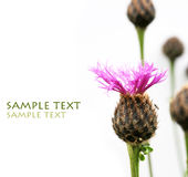 Flora. Lovely flora against white background Royalty Free Stock Photography