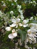 flora royalty-vrije stock afbeeldingen