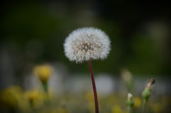 flora fotos de stock royalty free
