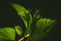flora Immagine Stock