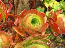 flora Royalty-vrije Stock Fotografie