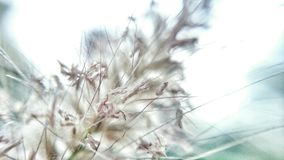 Flora ,  abstract Royalty Free Stock Image