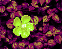 Flora abstrata Imagens de Stock