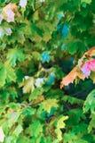 Flora achtergrond de verticale van de achtergrondontwerpbasis in zonlicht heldere verfrissende prentbriefkaar royalty-vrije stock afbeelding