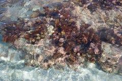 Flora acquatica Fotografia Stock