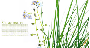 Flora against white background Stock Image