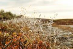 Flora alpina imagens de stock royalty free