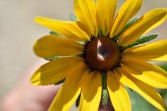 Flora amarela imagem de stock