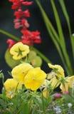 Flora amarilla y roja hermosa Fotos de archivo