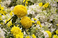 Flora art and Flower arrangement with Bright yellow and white ch. Rysanthemum Stock Photo