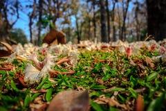 Flora au sol Photo libre de droits