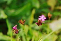 Flora av Carpatians Arkivfoto