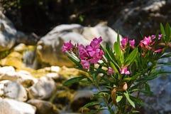 Flora av den Samaria klyftan Arkivbild