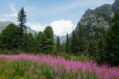 Flora av höga Tatras, Slovakien Arkivbild