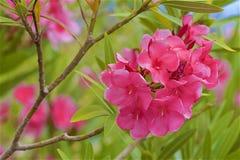 Flora av madeiran, Portugal royaltyfri fotografi