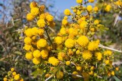 Flora av Souss Masa National Park Royaltyfri Foto