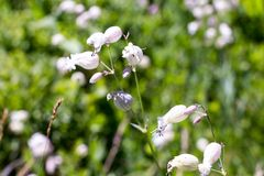 Flora av ukrainareCarpathians berg Arkivbild